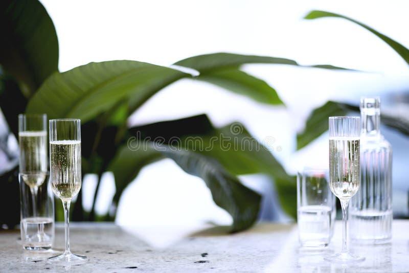 Champagne i härligt exponeringsglas Möte i en stadsrestaurang eller kafé houseplants fotografering för bildbyråer