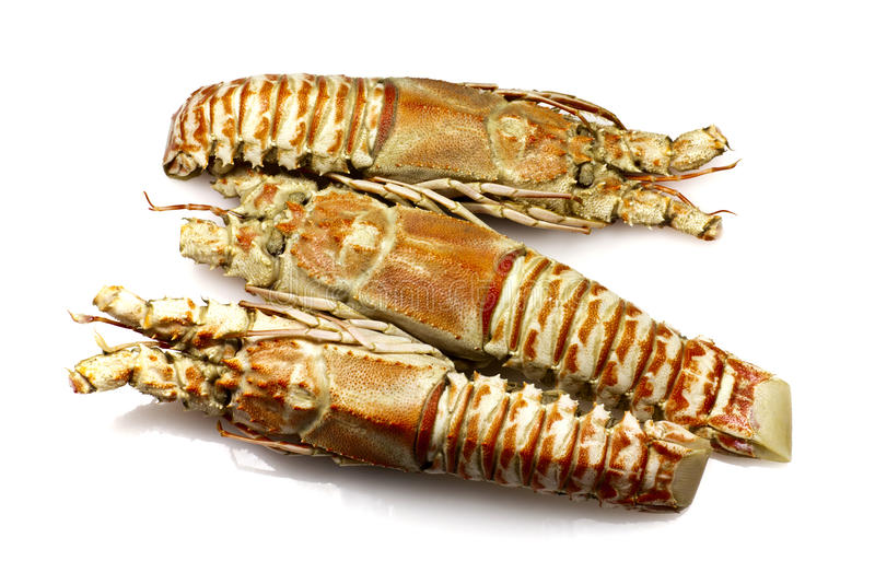 Download Champagne Lobster stock image. Image of cooked, seafood - 24348489
