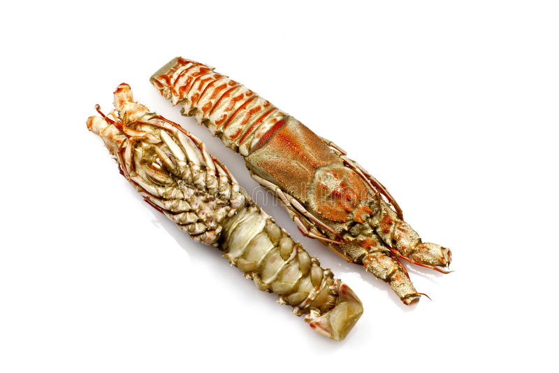 Champagne Lobster Stock Images