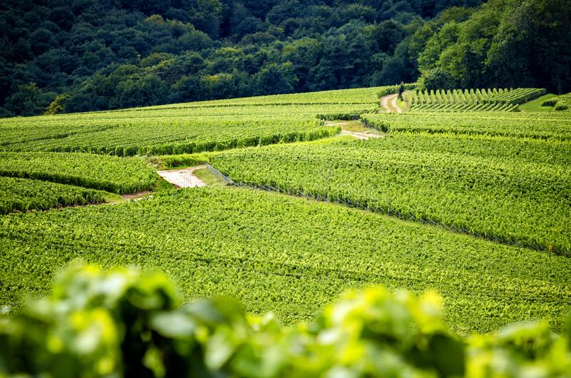 Champagne, Reims. Montagne de Reims. Hills covered with vineyards. France stock image