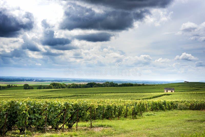 Champagne, Reims Montagne de Reims Montes cobertos com os vinhedos france foto de stock royalty free