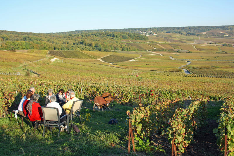 Download Champagne Tasting In The Vineyard Editorial Stock Image - Image: 21611699