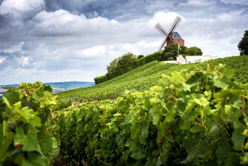 Champagne. Vineyard and windmill Champagne Region near Vernezay France royalty free stock photography