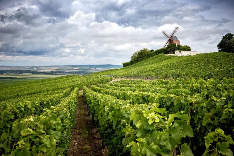 Champagne. Vineyard and windmill Champagne Region near Vernezay France royalty free stock images