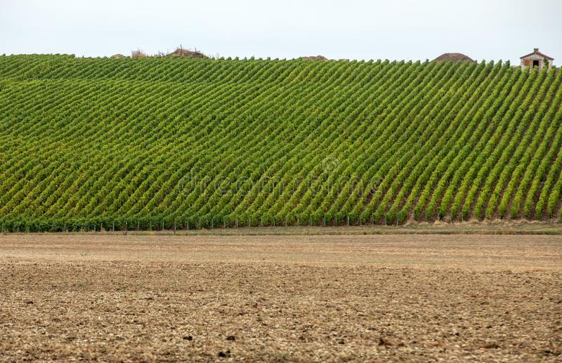 Champagne vineyards in the Cote des Bar area of the Aube department royalty free stock image