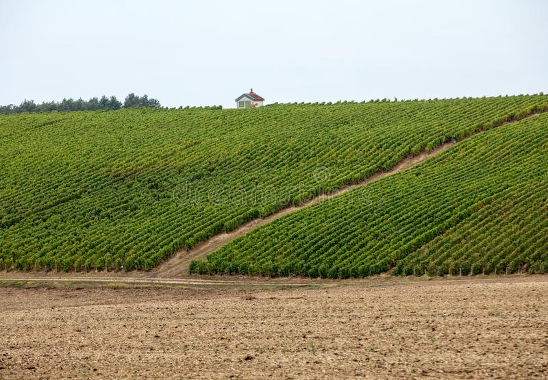 Champagne vineyards in the Cote des Bar area of the Aube department. royalty free stock images