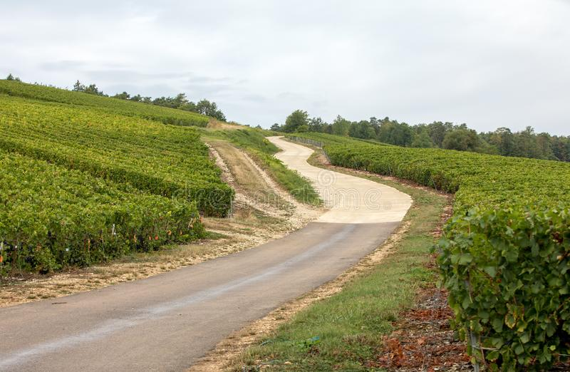 Champagne vineyards in the Cote des Bar area of the Aube department. stock photo