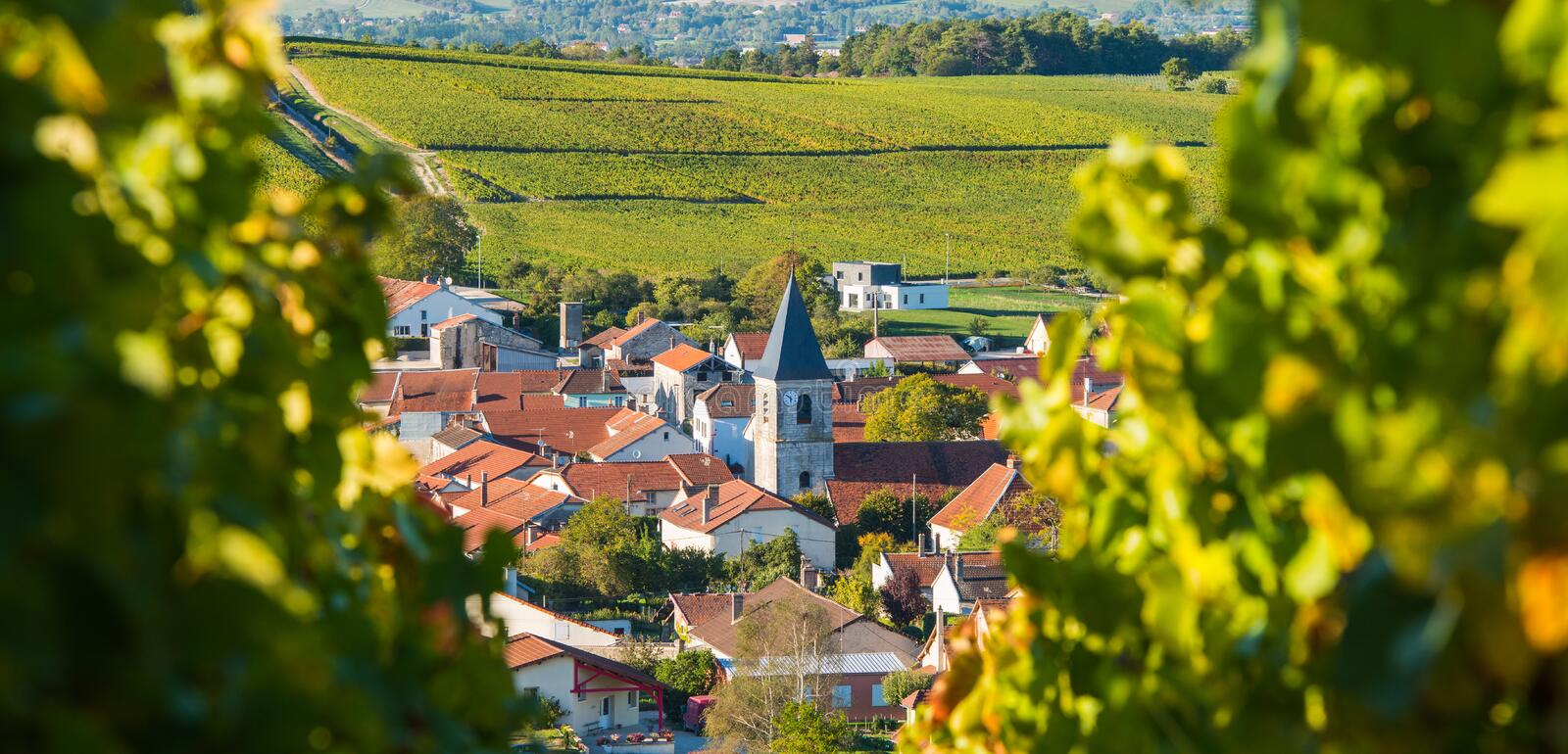 Champagne vineyards in the Cote des Bar Aube royalty free stock image