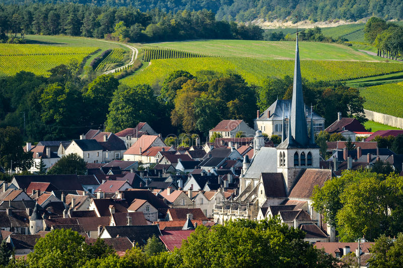 Champagne vineyards in the Cote des Bar, Aube royalty free stock photos