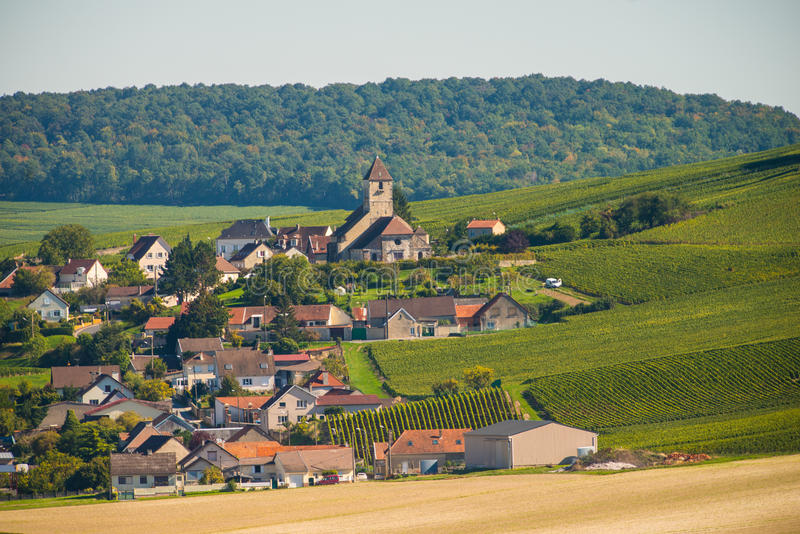 Champagne vineyards Cuis in Marne department, France royalty free stock image