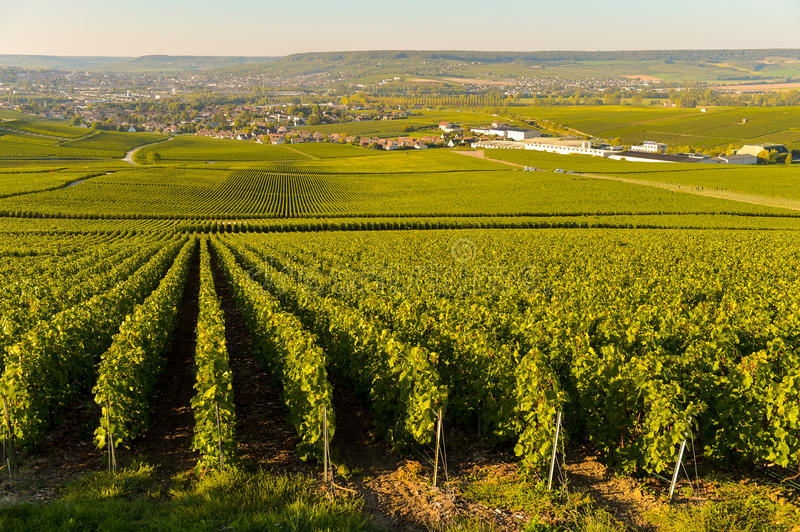 Champagne vineyards in Marne department, France royalty free stock photos