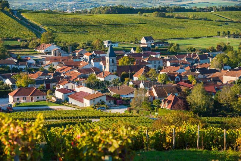 Champagne-wijngaarden in de Kooi des Bar Aube stock foto's