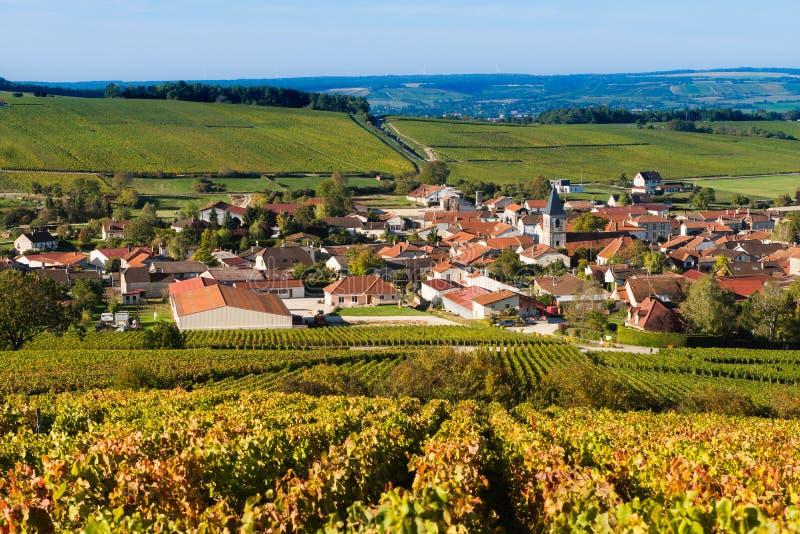 Champagne-wijngaarden in de Kooi des Bar Aube stock afbeeldingen