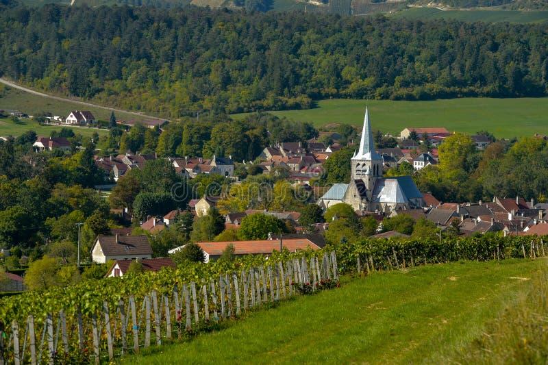 Champagne-wijngaarden in de Kooi des Bar, Aube royalty-vrije stock afbeeldingen