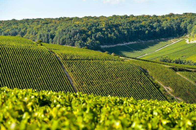 Champagne-wijngaarden in de Kooi des Bar, Aube royalty-vrije stock foto