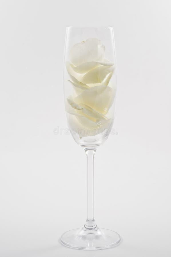 Champagneexponeringsglas med vitroskronblad royaltyfri bild