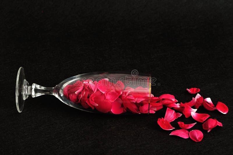 Champagneexponeringsglas som fylls med rosa kronblad royaltyfri bild