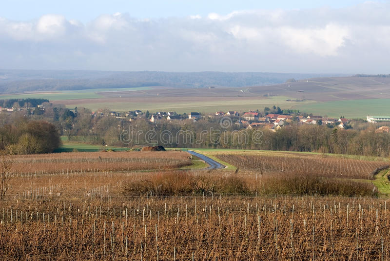 champagnefrance vingårdar royaltyfri bild