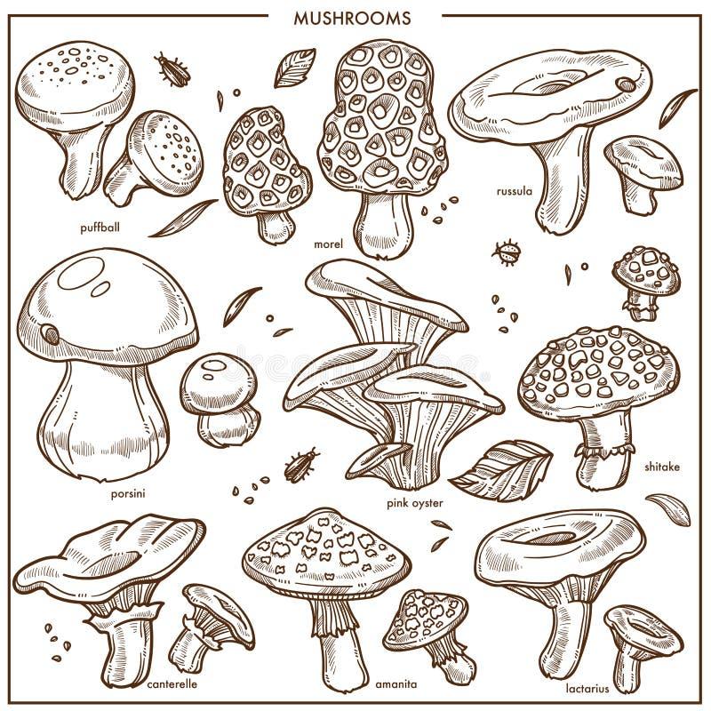 Champiñón comestible de los iconos del vector del bosquejo de las setas, stock de ilustración