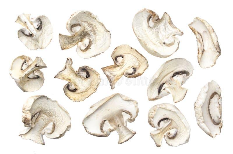 Champiñones secados aislados en el fondo blanco imagen de archivo