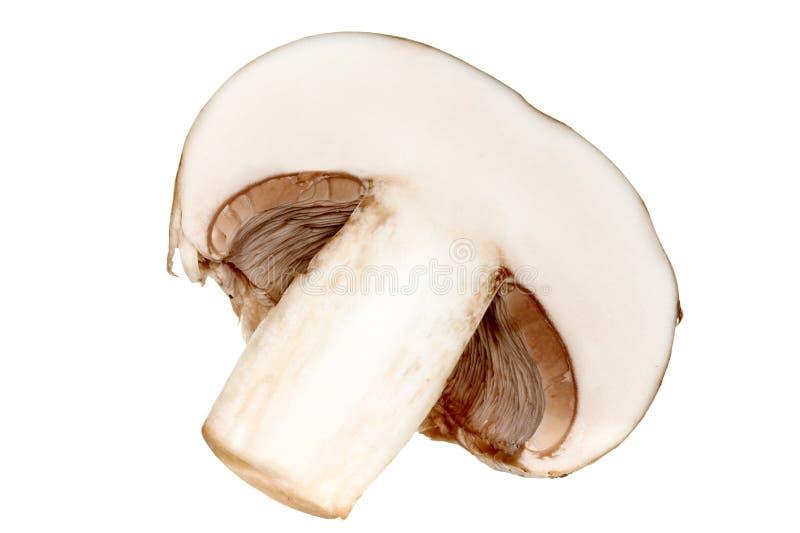 champignon royaltyfria bilder
