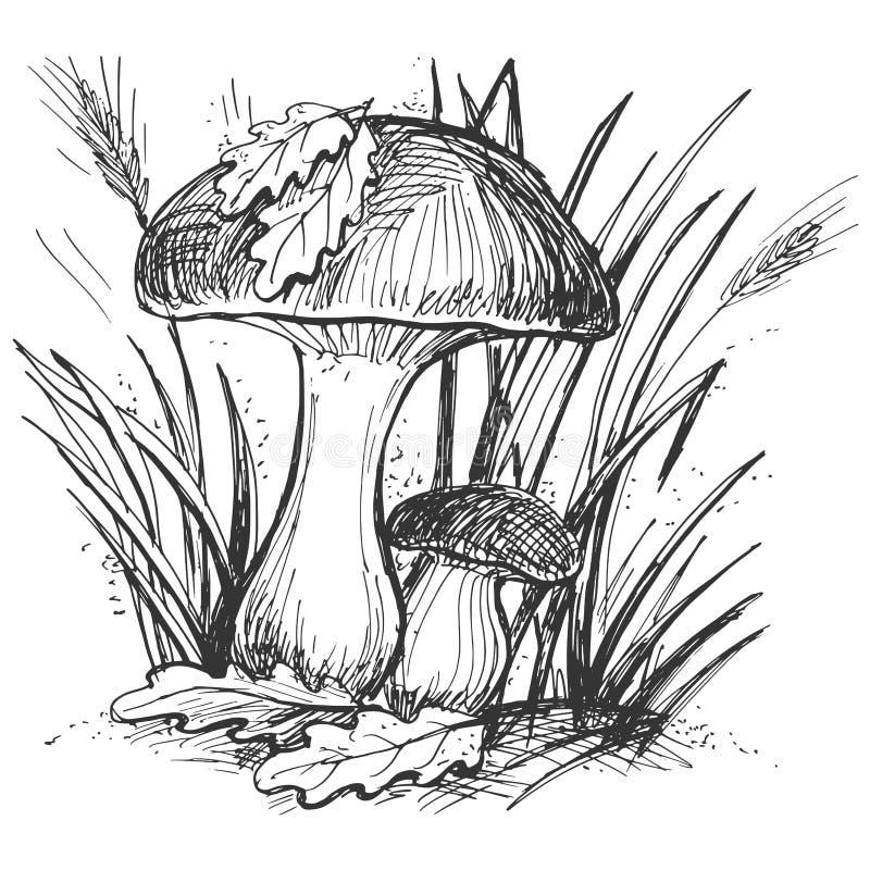 Champignon illustration de vecteur