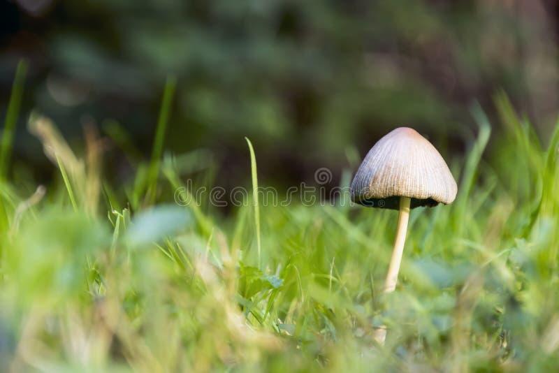 Champignon images stock