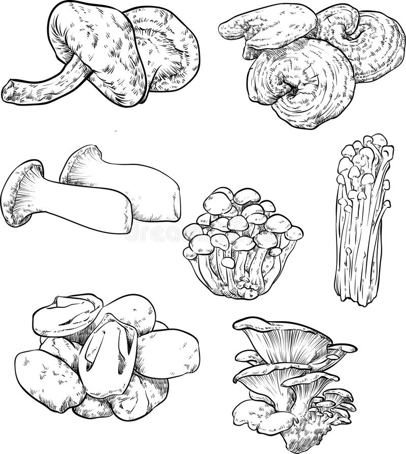 Champignon illustration stock