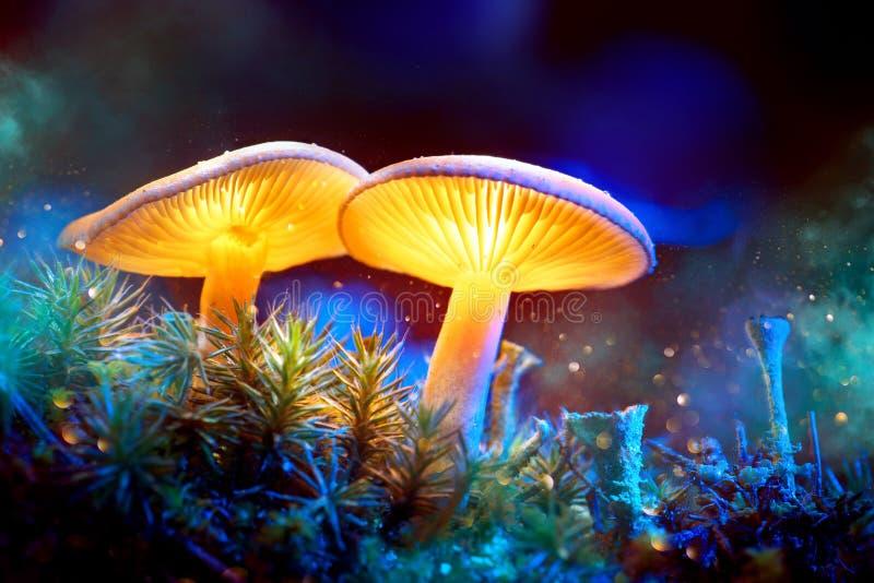 Champignon Champignons rougeoyants d'imagination dans la forêt d'obscurité de mystère photos stock