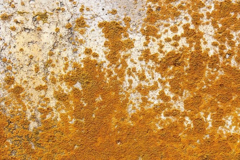 Champignon coloré sur le mur en béton image libre de droits