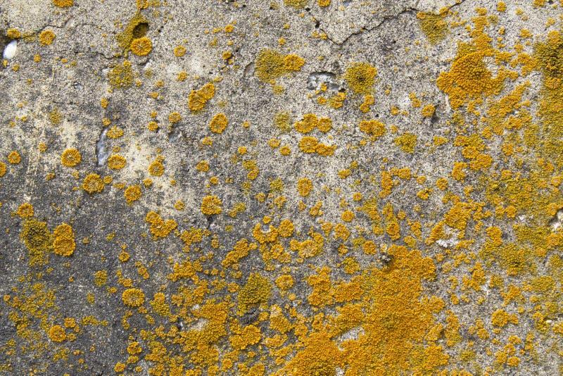 Champignon coloré sur le mur en béton photo libre de droits