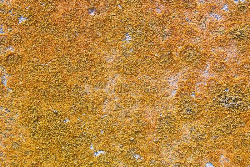 Champignon coloré sur le mur en béton images stock
