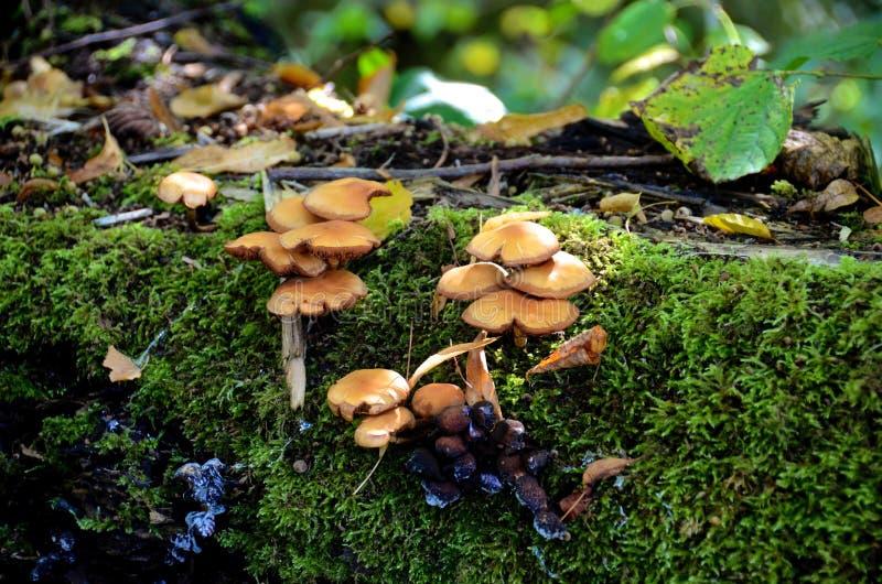 Champignon d'arbre images stock