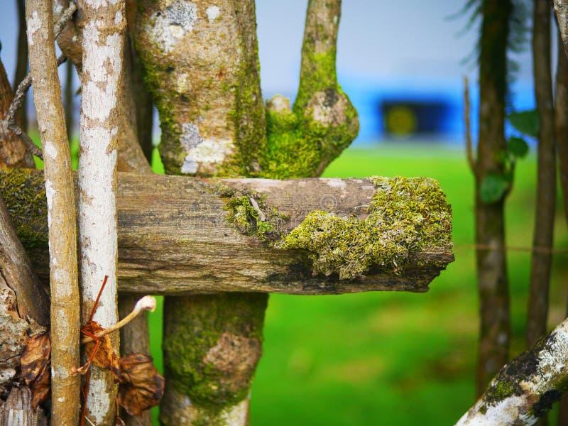 Champignon d'arbre photo stock