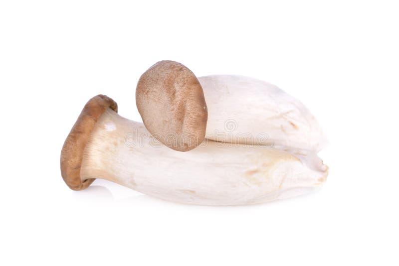Champignon champignon d'Eryngii ou d'huître cru de roi sur le backg blanc image stock