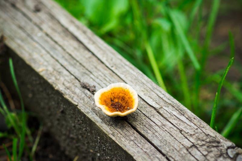 Download Champignon dans la forêt photo stock. Image du décomposition - 76078186