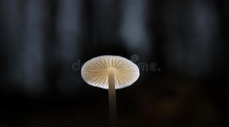 Champignon dans la forêt foncée d'automne photo stock