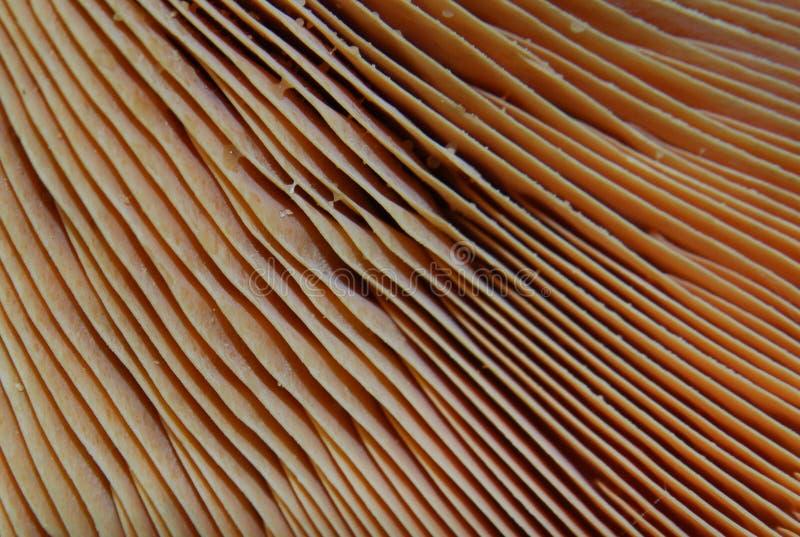 Champignon de couche image stock