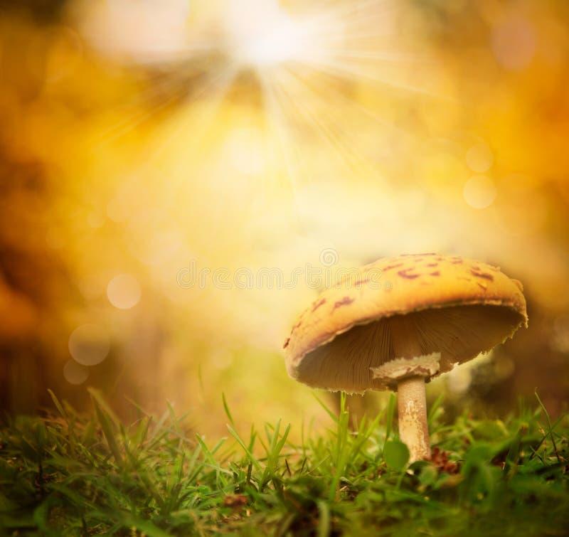 Champignon de couche de forêt d'automne images stock
