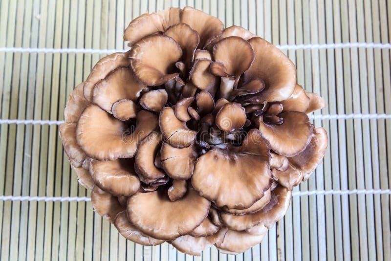 Champignon de couche de Maitake image stock