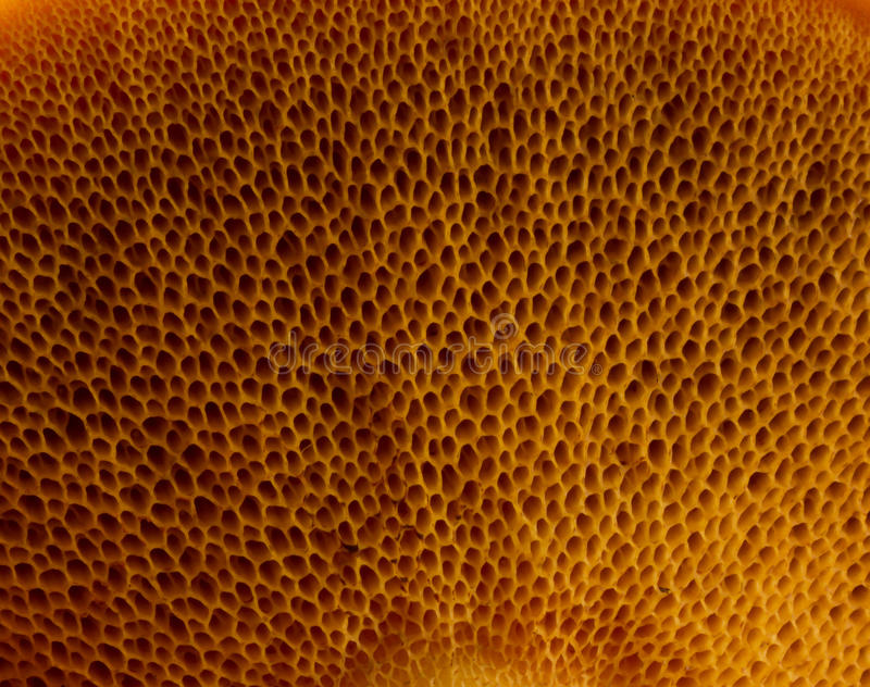 Champignon de couche de texture photos stock