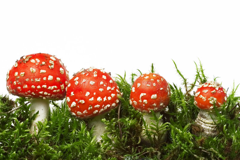 Champignon de couche rouge photo stock