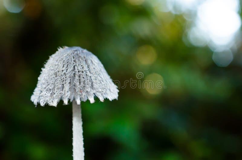 Champignon de dentelle de forêt image libre de droits