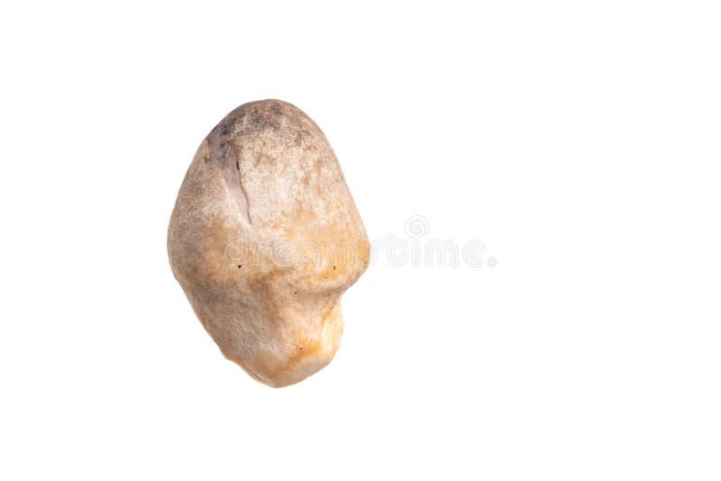 Champignon de paille d'isolement sur le blanc photo stock