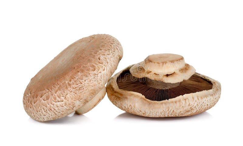 Champignon de Portobello d'isolement sur le fond blanc photo stock