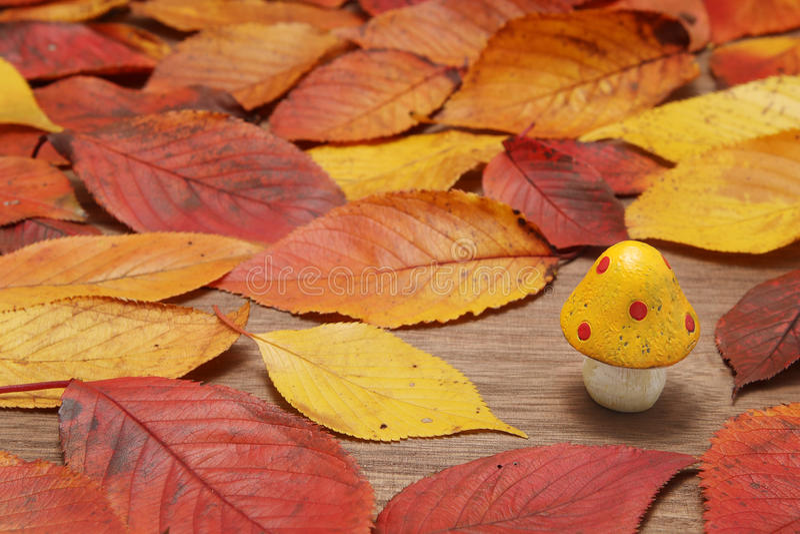 Champignon et feuilles tombées sur la table en bois photos libres de droits