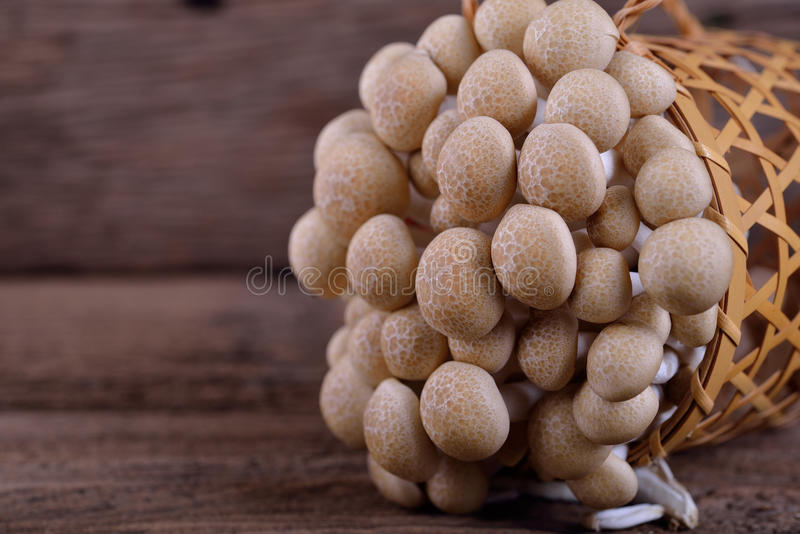 Champignon frais de hêtre de brun de buna-shimeji dans le panier et sur le woode photo stock