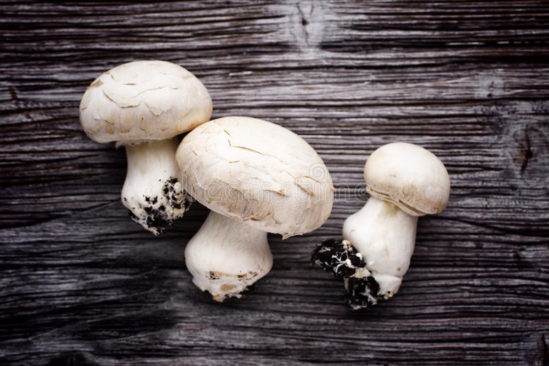 Champignon. Fresh champignon on a wooden table. New crop stock images