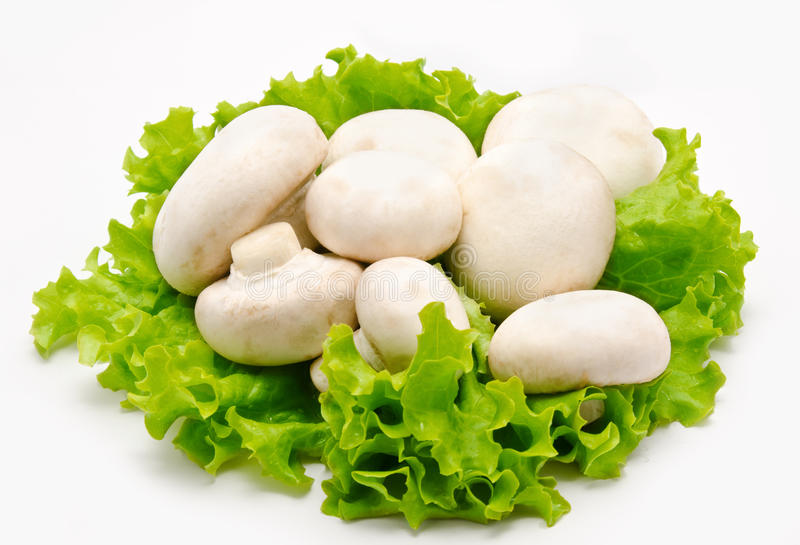 Champignon mushroom on thr lettuce leaves. Champignon mushroom white agaricus on thr lettuce leaves royalty free stock photos