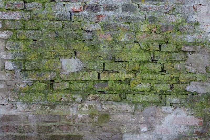 champignon ou putr faction de moule vert dans le mur de. Black Bedroom Furniture Sets. Home Design Ideas